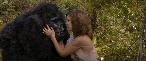 gorilla3_large